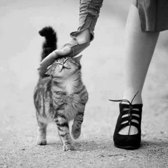 gato-reflexiones